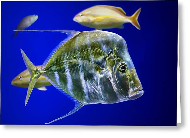 Tropical Oceans Greeting Cards - Aquarium Life Greeting Card by Nikolyn McDonald