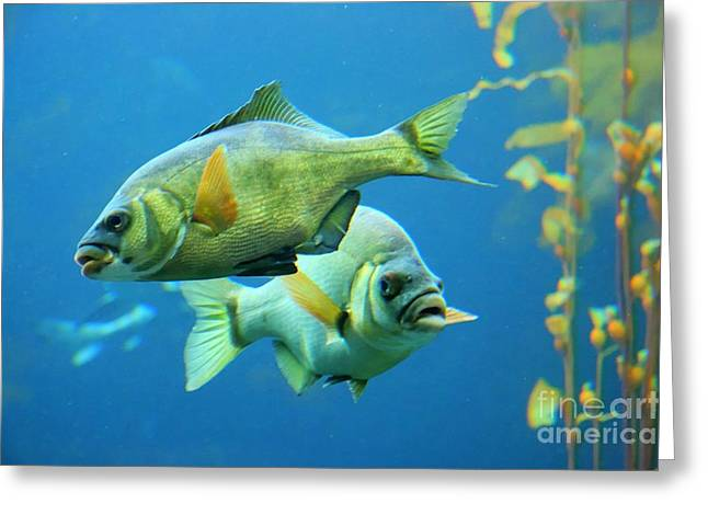 Aquarium Greeting Card by Tap  On Photo