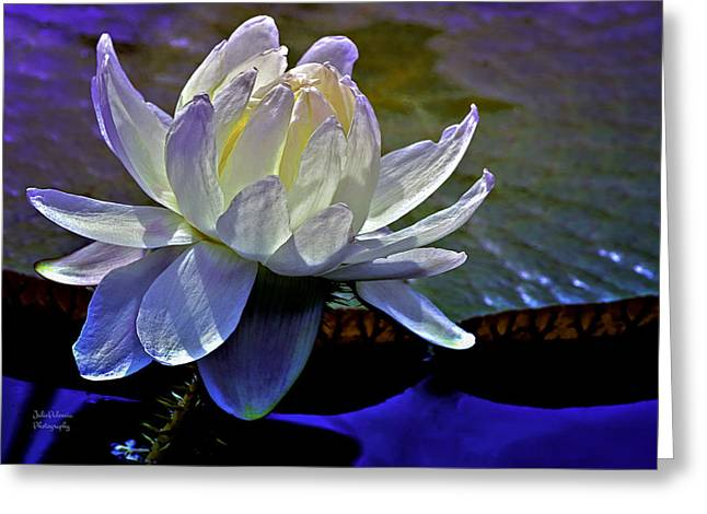 White Waterlily Greeting Cards - Aquatic Beauty in White Greeting Card by Julie Palencia
