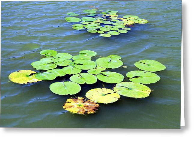 Aquatic Greeting Cards - Aquatic Plants Greeting Card by Valentino Visentini