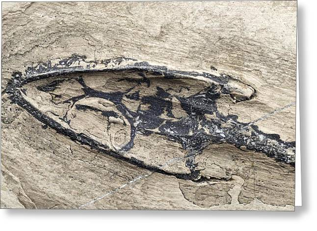 Aquatic Greeting Cards - Aquatic Reptile Skull Greeting Card by Science Photo Library