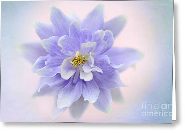 Flowered Greeting Cards - Aquilegia Aura Greeting Card by Jacky Parker
