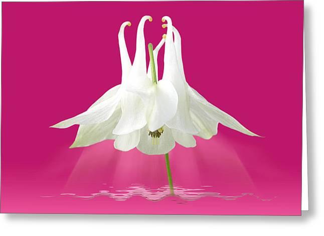 Garden Petal Image Greeting Cards - Aquilegia Spotlight in Cerise Pink Greeting Card by Gill Billington