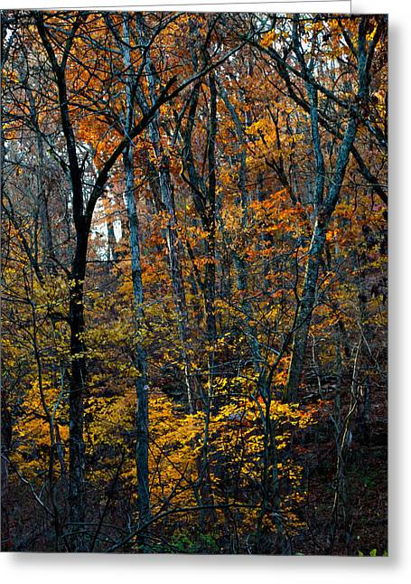 Arkansas Greeting Cards - AR Fall 12-005FP Greeting Card by Scott McAllister