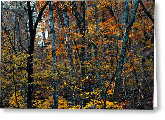 AR Fall 12-005FP Greeting Card by Scott McAllister