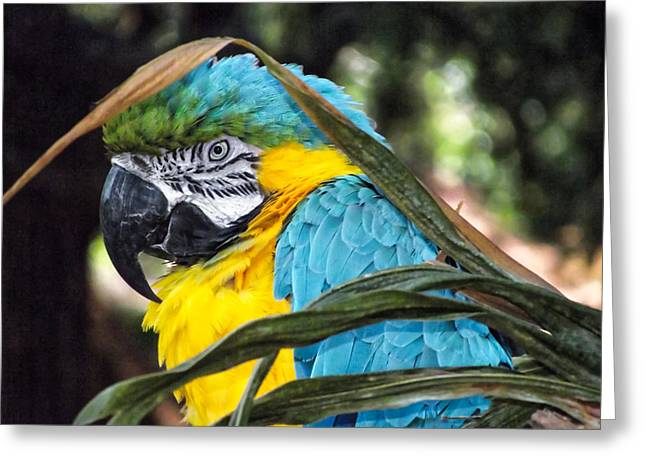 Macaw Profile Greeting Cards - Macaw Greeting Card by Laszlo Prising