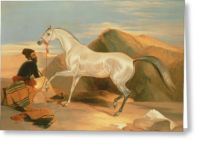 Orientalists Photographs Greeting Cards - Arab Stallion Oil On Canvas Greeting Card by Sir Edwin Landseer