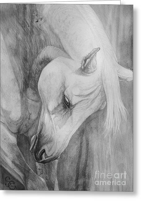 Horse Drawings Greeting Cards - Arabian Gentleness Greeting Card by Silvana Gabudean