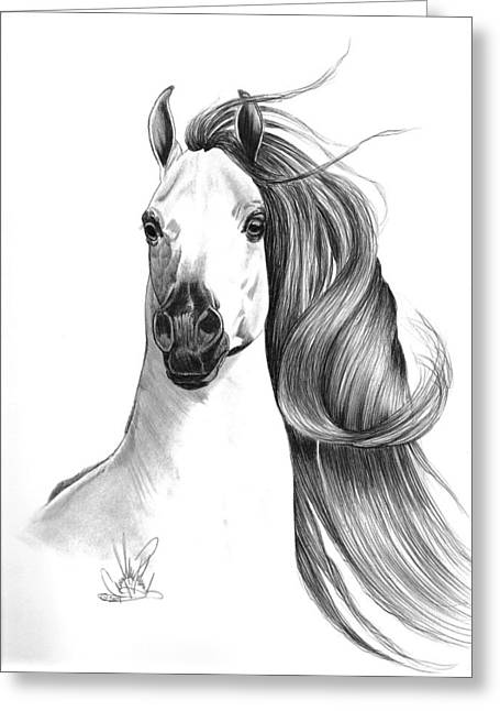Arabian Horse Greeting Card by Cheryl Poland