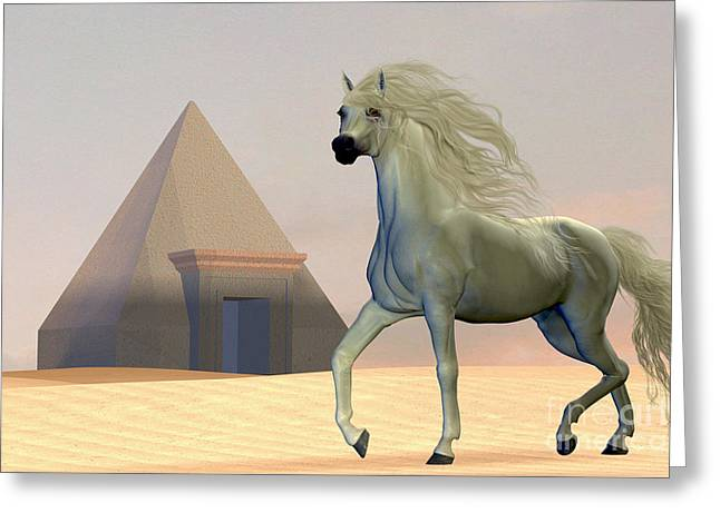 Horse Images Digital Greeting Cards - Arabian Horse Greeting Card by Corey Ford