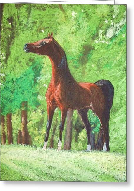Horse Images Pastels Greeting Cards - Arabian horse in a forest clearing Greeting Card by Dorota Zdunska