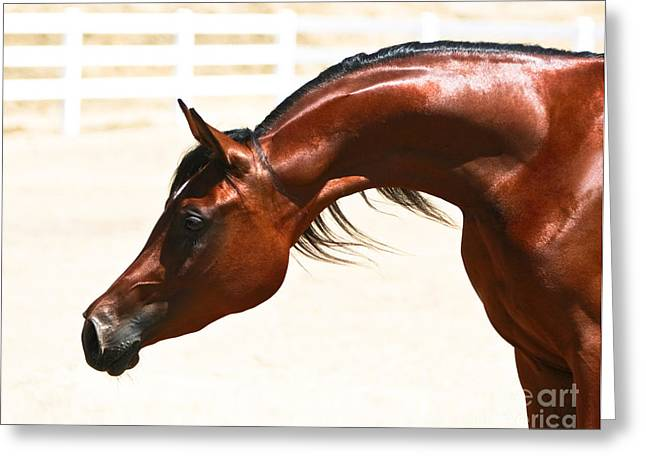 Quarter Horses Greeting Cards - Arabian Mare Greeting Card by Holly Martin