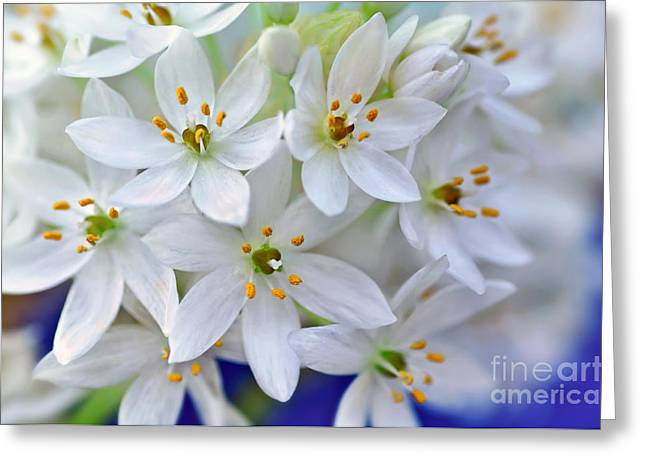 Star Of Bethlehem Greeting Cards - Arabs Eye Greeting Card by Kaye Menner