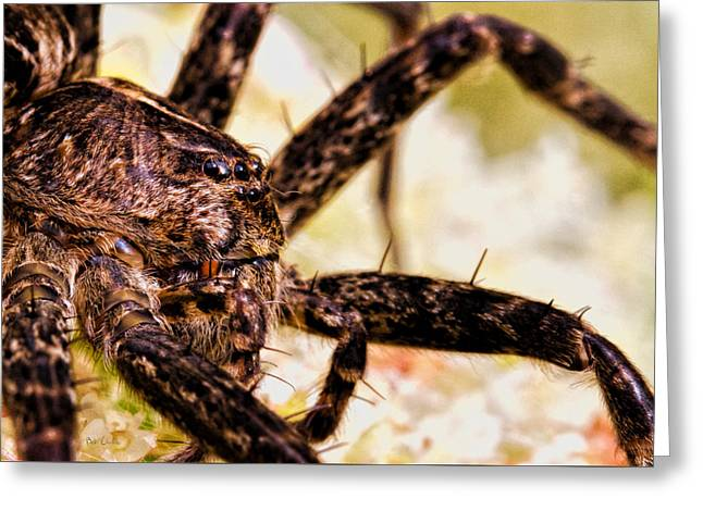 Spider Greeting Cards - Arachnophobia Greeting Card by Bob Orsillo