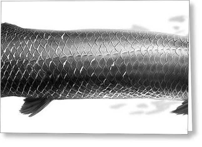 Fish Digital Greeting Cards - Arapaima gigas_01 Greeting Card by Javier Lazo