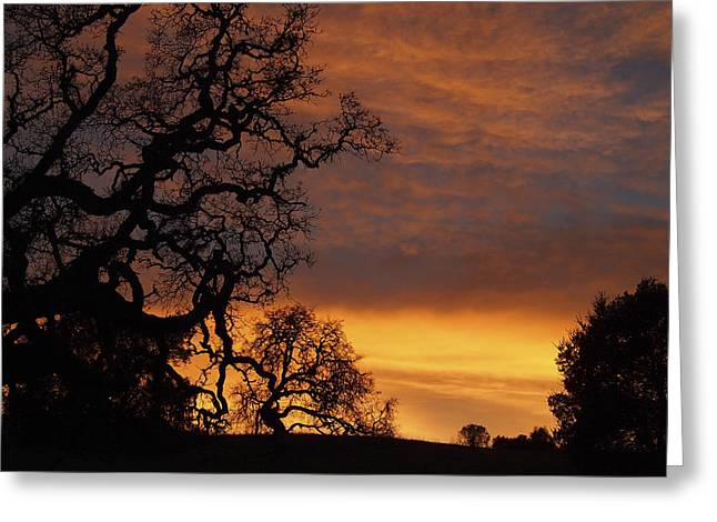 Arastradero Open Space Preserve Sunset Greeting Card by Priya Ghose