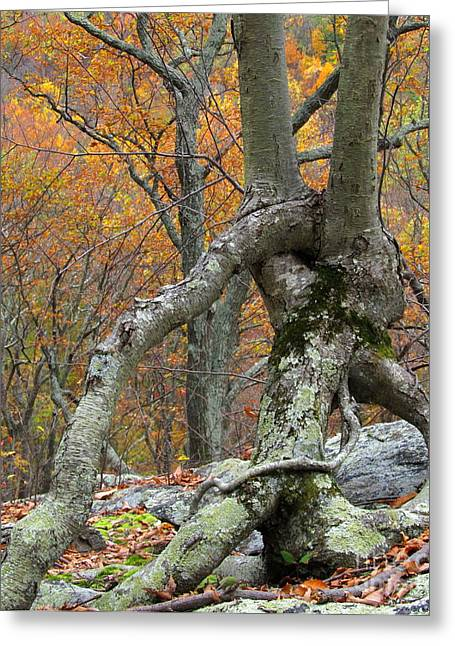 """""""strange Trees"""" Greeting Cards - Arboreal Architecture Greeting Card by Joshua Bales"""