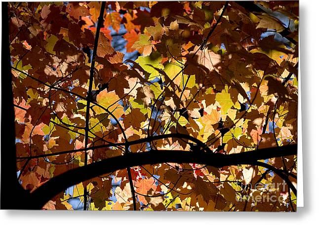 Steven Ralser Greeting Cards - Arboretum fall Greeting Card by Steven Ralser