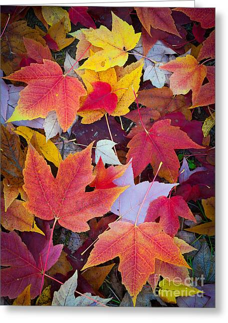 Pacific Northwest Greeting Cards - Arboretum Leaves Greeting Card by Inge Johnsson