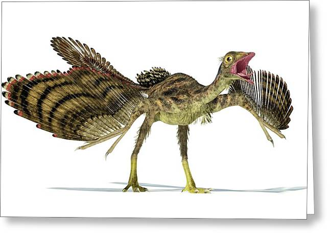 Archaeopteryx Dinosaur Greeting Card by Leonello Calvetti