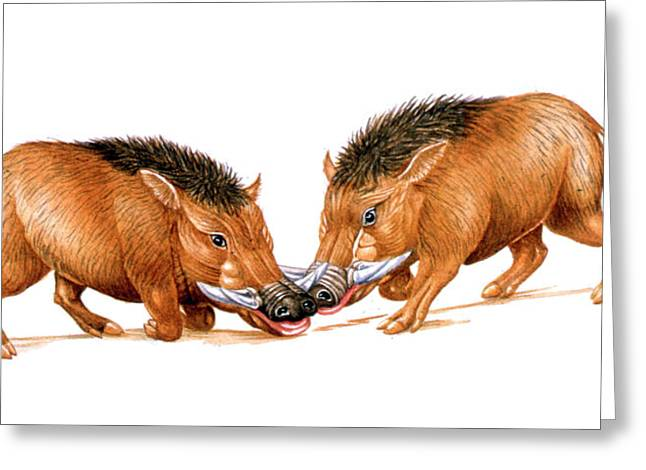 Archaeotherium Prehistoric Mammals Greeting Card by Deagostini/uig