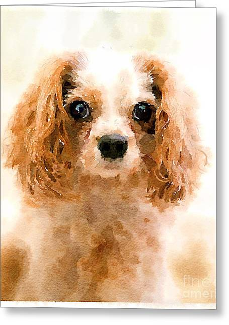 Scruffy Greeting Cards - Archie watercolour Greeting Card by Jane Rix