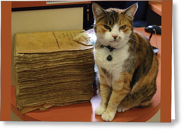 Archives Cat with FGB border Greeting Card by A Morddel