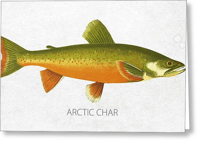 Arctic Greeting Cards - Arctic Char Greeting Card by Aged Pixel