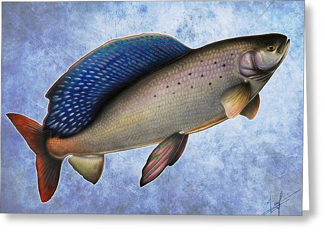Arctic Greeting Cards - Arctic Grayling Greeting Card by Nick Laferriere