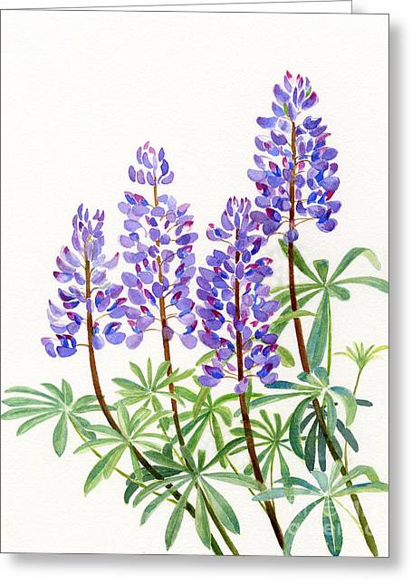Arctic Greeting Cards - Arctic Lupine 2 Greeting Card by Sharon Freeman