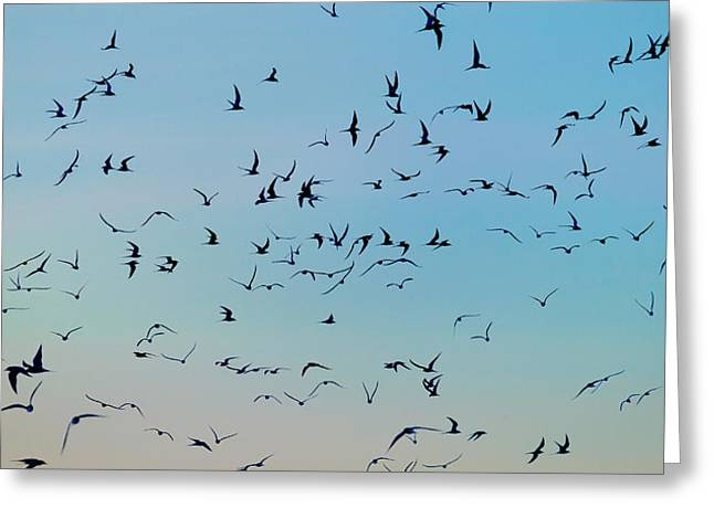 Arctic Terns Greeting Cards - Arctic Terns Flying, Reykjavik, Iceland Greeting Card by Panoramic Images