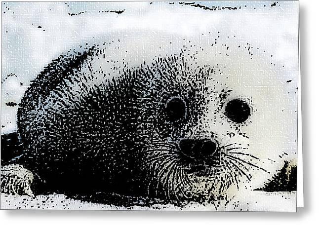 Seal Drawings Greeting Cards - Arctic Treasure Greeting Card by Shere Crossman