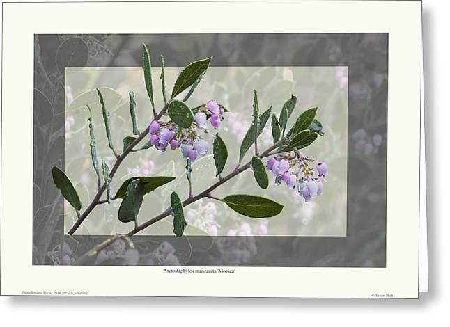 Arctostaphylos manzanita 'Monica' Greeting Card by Saxon Holt