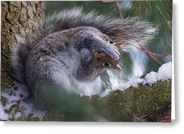 Squirrels Greeting Cards - Are we still friends? Greeting Card by Everet Regal