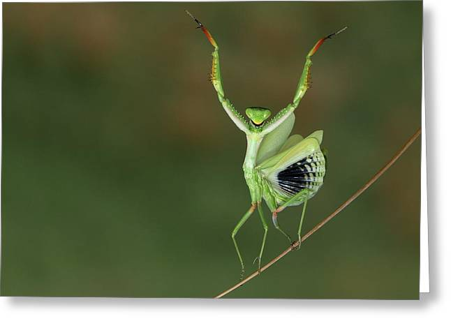 Are You Gonna Dance With Me ? Greeting Card by Hasan Baglar