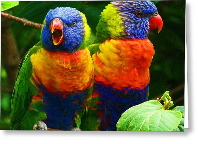 Saheed Greeting Cards - Are You Listening - Rainbow Lorikeets Greeting Card by Margaret Saheed