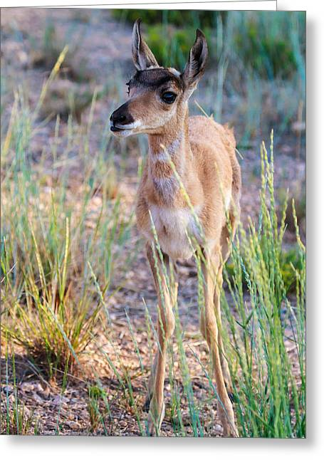 Southwest Wildlife Greeting Cards - Are You My Mother? Greeting Card by James Marvin Phelps
