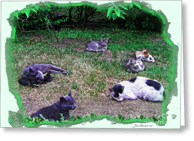 Kitty Kat Greeting Cards - Argentina Cat Park Greeting Card by Joan  Minchak
