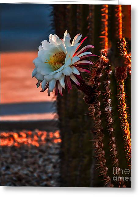 Haybale Greeting Cards - Argentine Cactus Greeting Card by Robert Bales