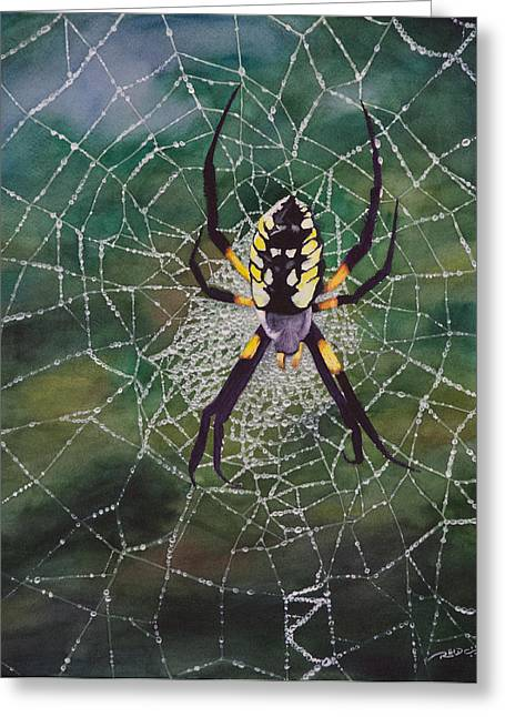 Insect Greeting Cards - Argiope Web Greeting Card by Christopher Reid