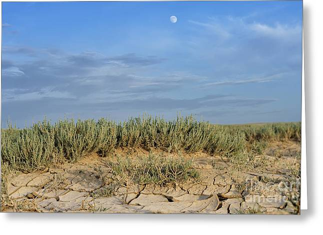 Mud Season Greeting Cards - Arid landscape with cracked mud Greeting Card by Alexandr  Malyshev