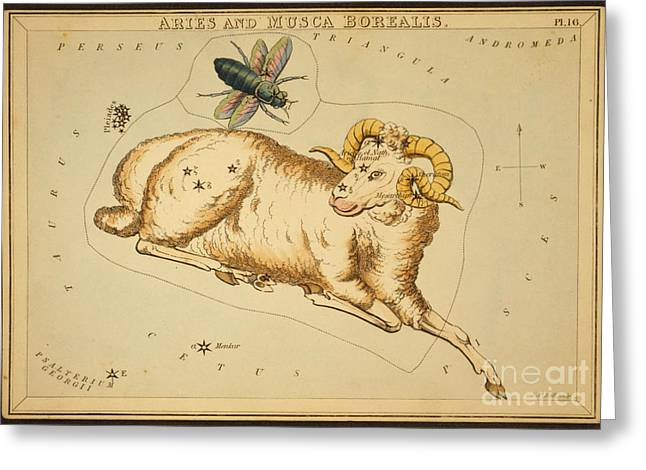 Zodiacal Greeting Cards - Aries Constellation Zodiac Sign 1825 Greeting Card by Science Source