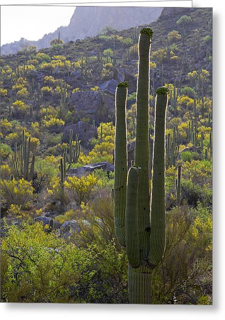 Harsh Conditions Digital Art Greeting Cards - Arizona Desert Greeting Card by Samuriah Robinson