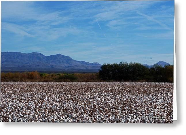 Cotton Farm Greeting Cards - Arizona Fall Greeting Card by Methune Hively