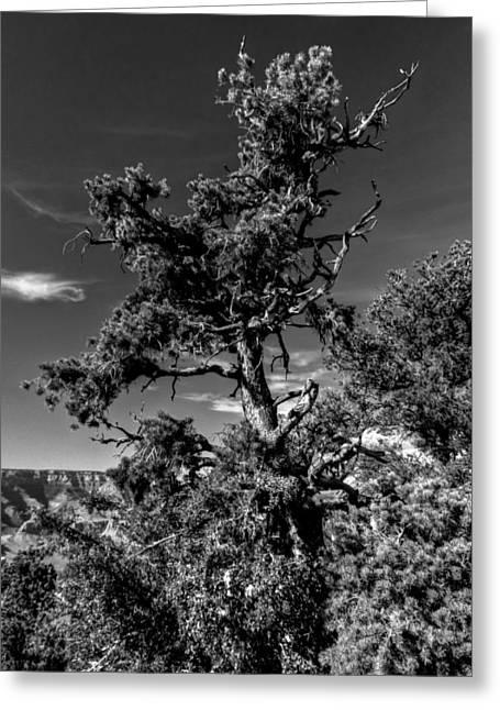 Canyons Greeting Cards - Arizona - Grand Canyon 009 Greeting Card by Lance Vaughn