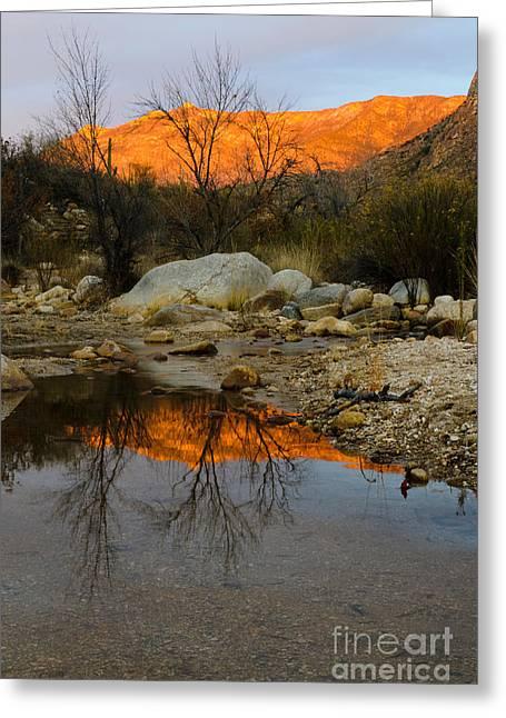 Catalina Mountains Greeting Cards - Arizona Landscape Greeting Card by John Shaw