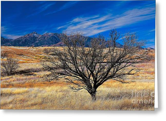 Santa Cruz Art Greeting Cards - Arizona Mesquite and Mountains Greeting Card by Henry Kowalski