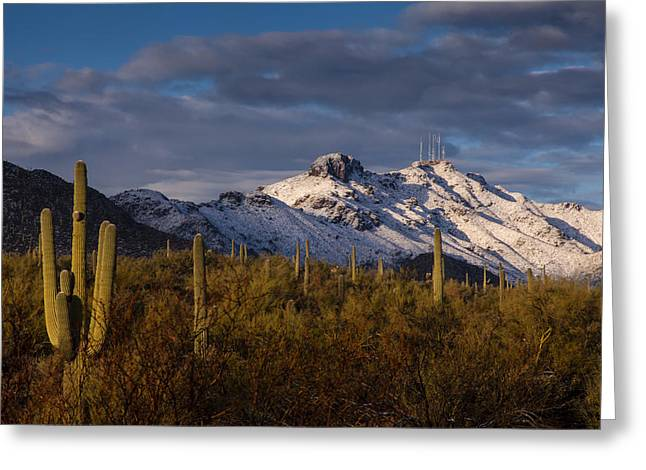 Catalina Mountains Greeting Cards - Arizona Mountains in Snow Greeting Card by Rob Travis