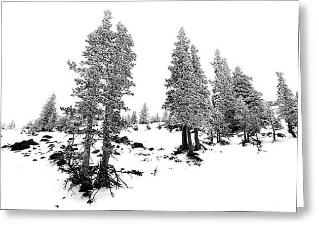 Snowbowl Greeting Cards - Arizona Snowbowl  Greeting Card by Andrei Stoica