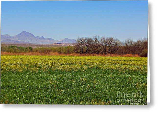 Arizona Spring Greeting Card by Methune Hively